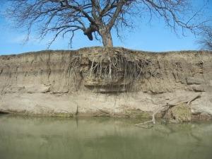 treeroots